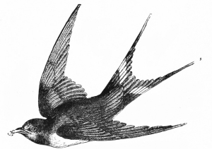 bird in flight 2